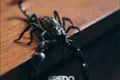 Fredo launches 'Scorpion' visuals   @Fredo